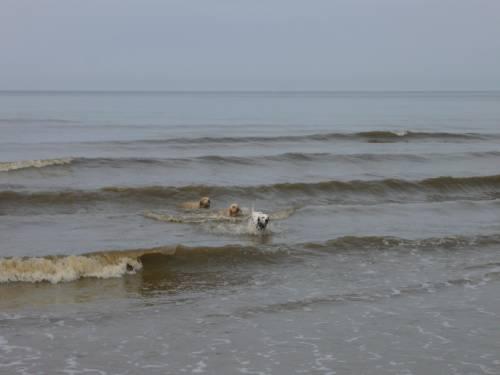 Drei Hunde und ein Ball