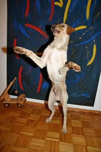 Man könnte meinen er kann tanzen.
