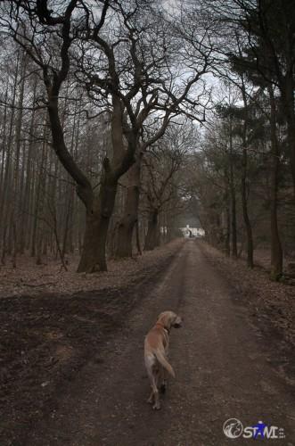Alleine auf dem Weg im Wald.
