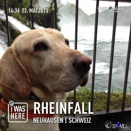 Schnitzel am Rheinfall.
