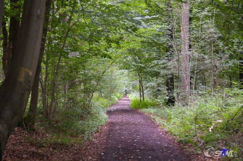 Waldweg im Wienertzpesch.