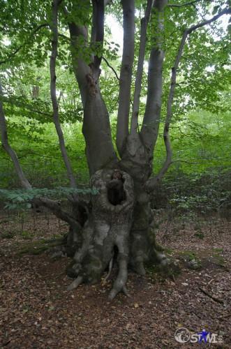 Toller alter Baumbestand.
