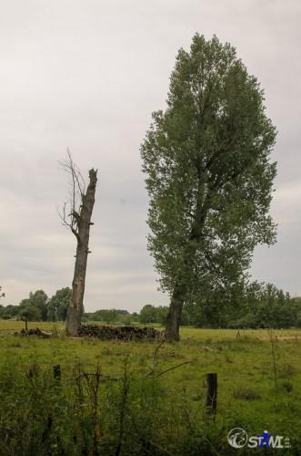 Bäume bei Laar.