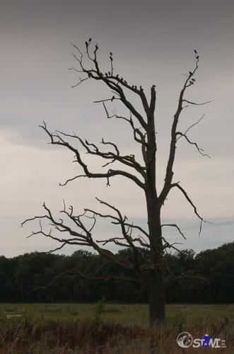 Abgestorbener Baum Nähe Laarer See.