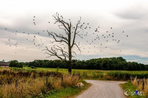 Vögel und Baum.
