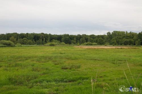 Naturschutzgebiet Tantelbruch.
