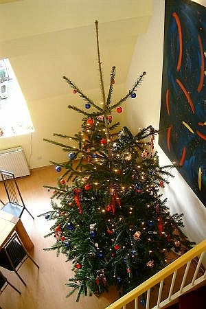 Stawi - Weihnachtsbaum 1